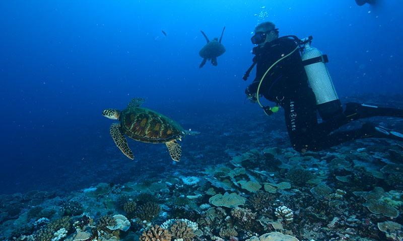 Dive Safely