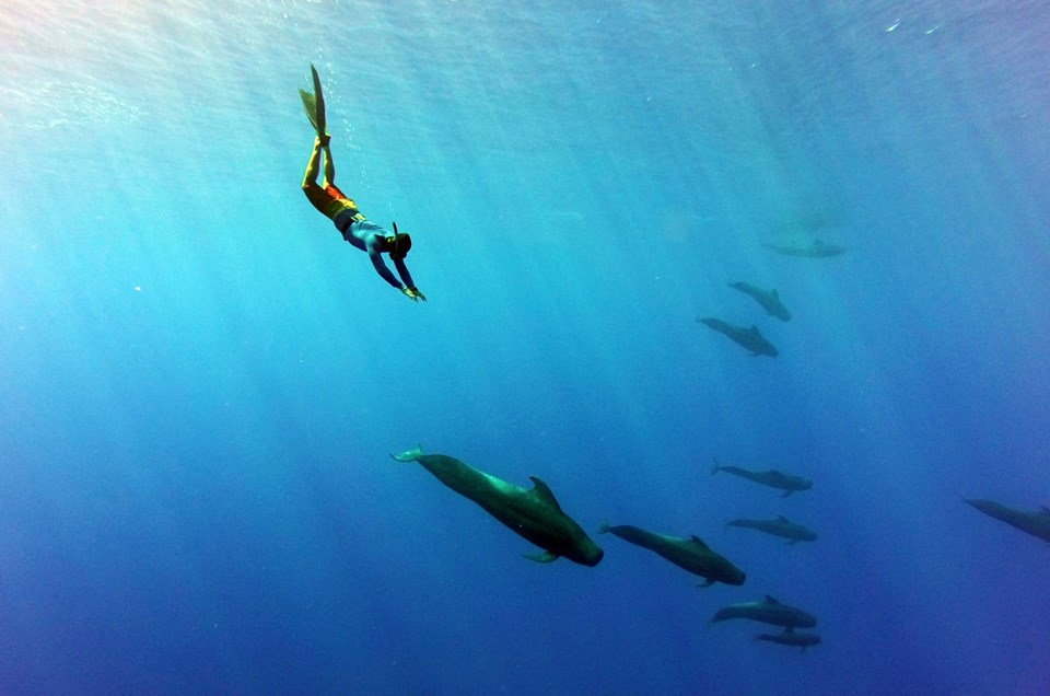 Discover the Ocean With Specialists