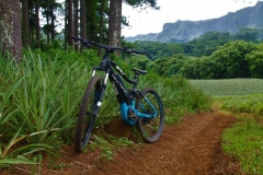 Moorea Electik Bike: To explore the inlands
